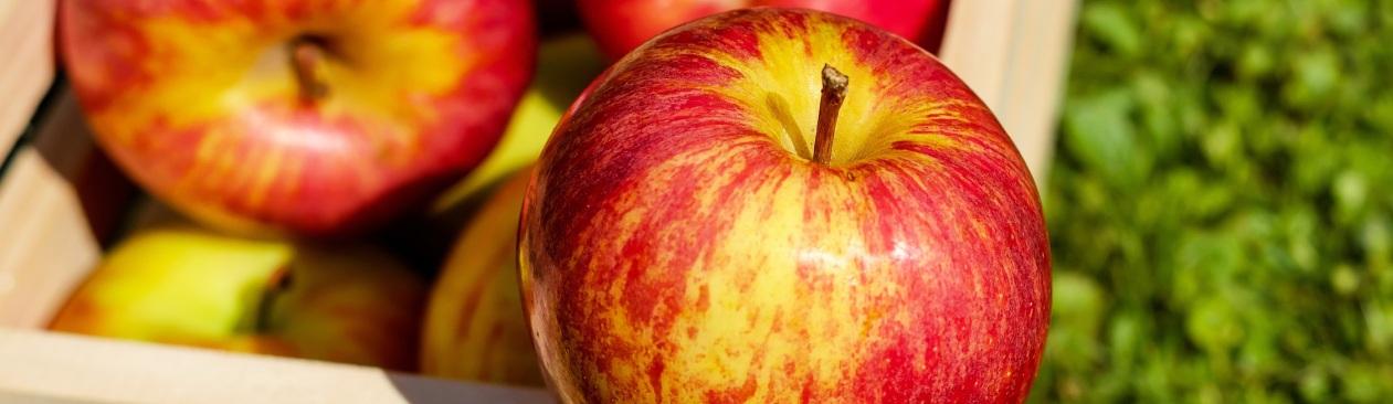 Pommes de printemps